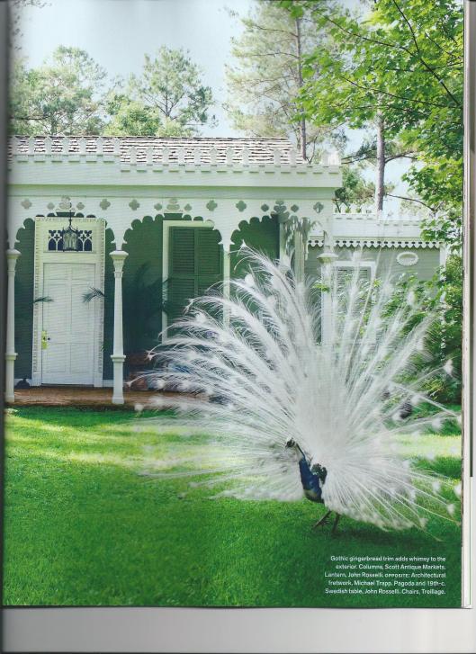 peacock white